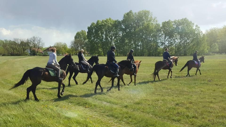 Nyári felnőtt lovas táborok